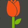 tulip_flower-512